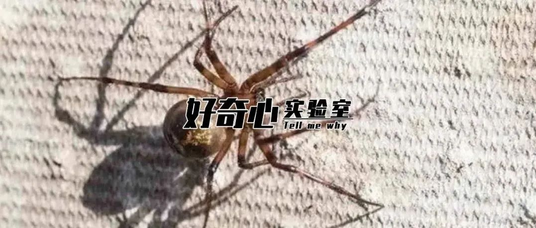 你可能对蜘蛛的毒一无所知
