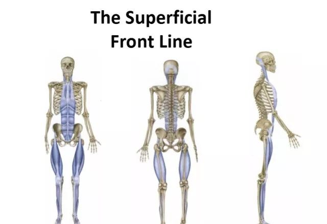 人體12條筋膜鏈解析及具體手法操作