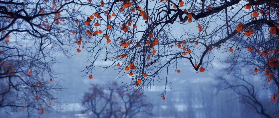 霜降:秋已深,冬将至,岁岁年年,愿你安暖