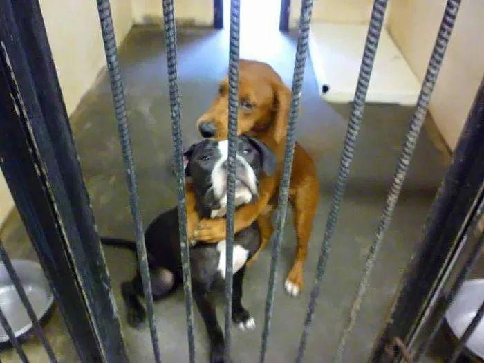 因为一个拥抱,改变了两条狗狗的命运...