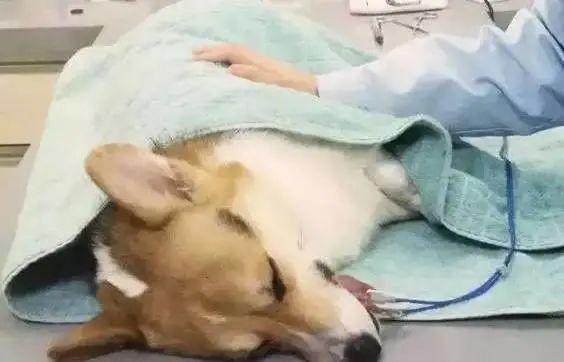 狗狗黄曲霉素中毒致死?这些东西我们一定要避开!