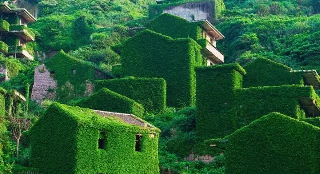 中國有一個小島,被遺棄了20年,卻美成了天堂