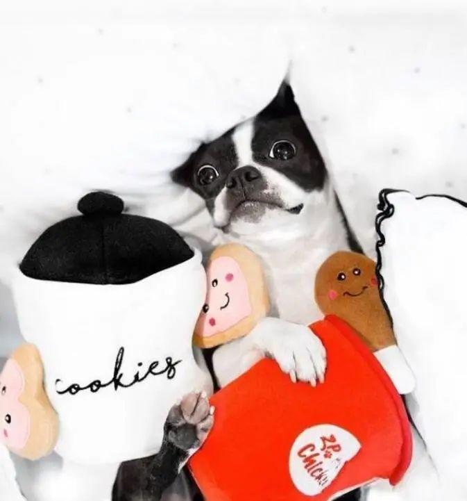 炫耀新年礼物的可爱狗狗们