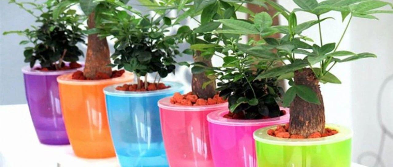 花盆不用再买啦,用塑料瓶制作花盆,自带浇水功能,比买的更好看