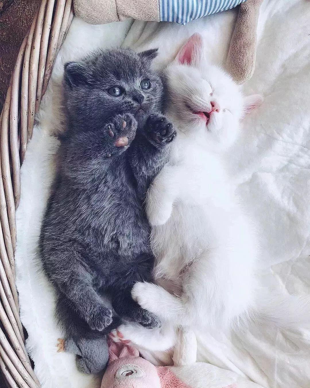 一只白猫生下三只小猫,它们在一起的画面好暖~