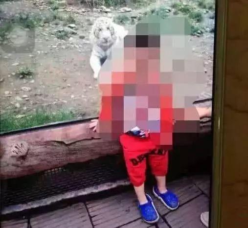 又有遊客在野生動物園擅自下車?之前的教訓不夠慘痛嗎?!