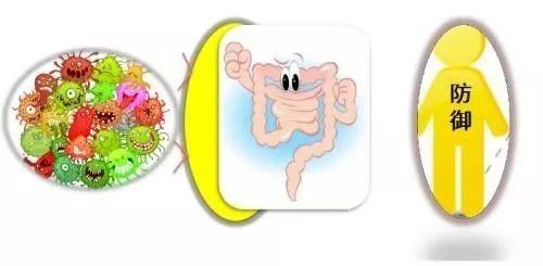 益生菌——肠道健康的巡查兵!