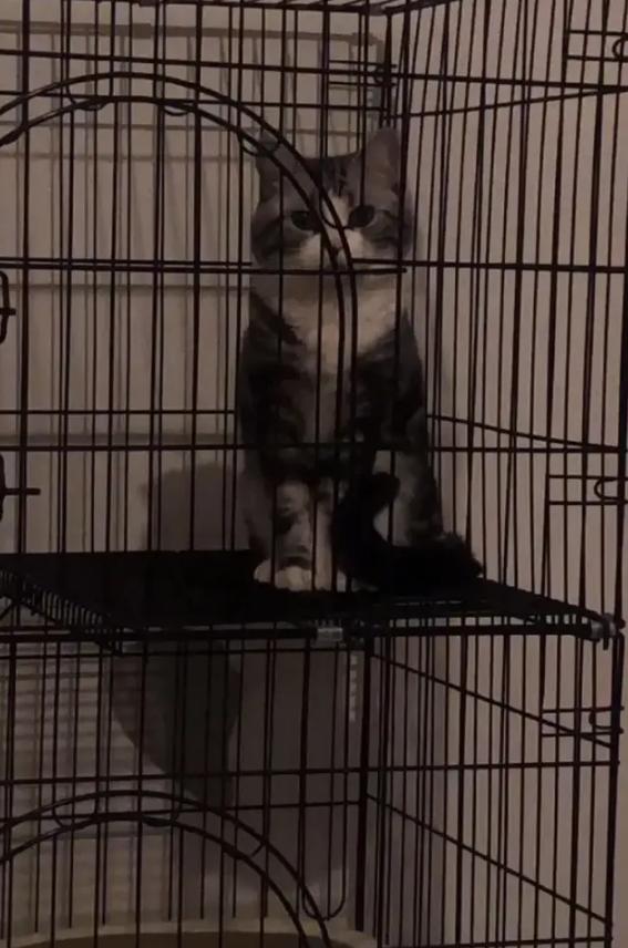 帮忙照顾猫的爸爸说猫不吃猫粮,猫:你是不是把我当傻子?