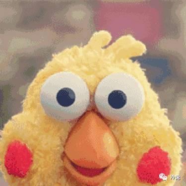 鸚鵡兄弟算什麼!這只黃雞魔性起來連自己都害怕