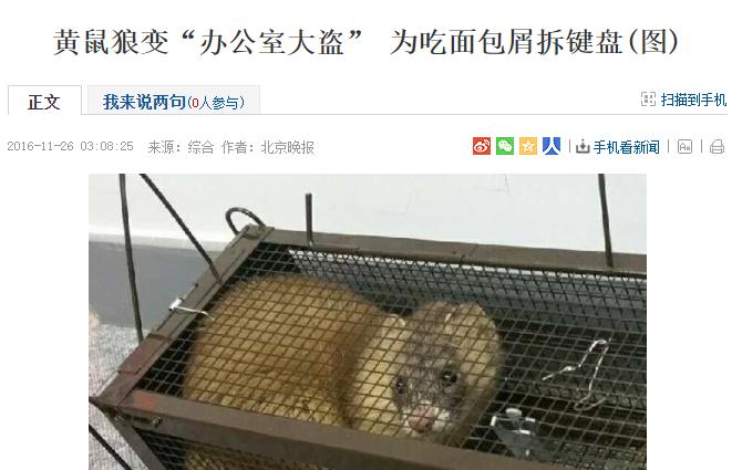 北京黄鼠狼,吓得我喊娘