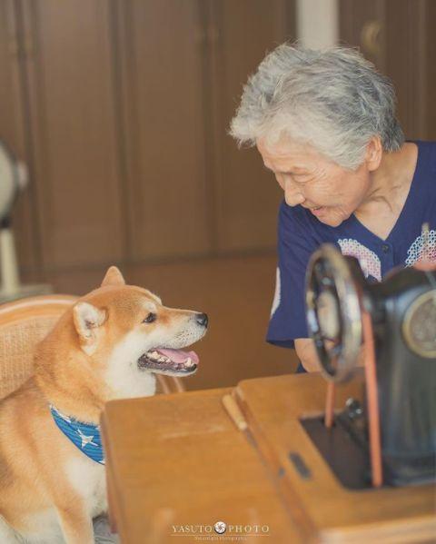 櫻花樹下85歲奶奶和柴犬一張照片,獲12萬人點讚: